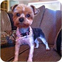 Adopt A Pet :: Harper - Miami, FL