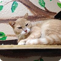 Adopt A Pet :: Velocidude - Gilbert, AZ