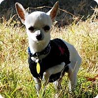 Adopt A Pet :: Luigi - Chandler, AZ