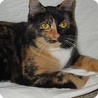 Adopt A Pet :: Heidi - Medina, OH