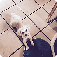 Adopt A Pet :: Harry - Mount Gretna, PA