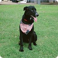 Adopt A Pet :: Mario - Carlisle, TN