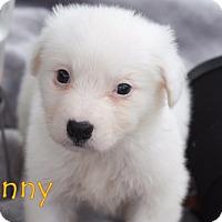 Adopt A Pet :: Lenny - Austin, TX