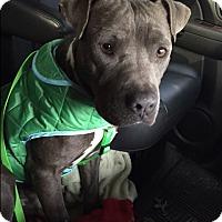 Adopt A Pet :: Mongo - Virginia Beach, VA