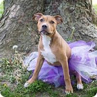 Adopt A Pet :: Buttercup - Charlotte, MI