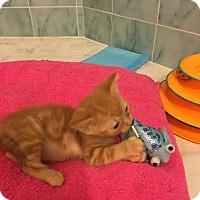 Adopt A Pet :: Mite - Orlando, FL