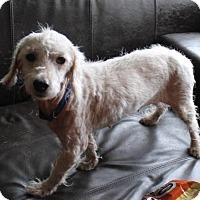 Adopt A Pet :: Vanna - Spring, TX