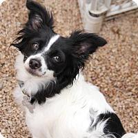 Adopt A Pet :: Dahlia - Phoenix, AZ