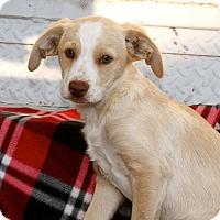 Adopt A Pet :: Meatball - Los Angeles, CA