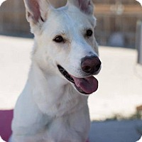German Shepherd Dog Dog for adoption in Las Vegas, Nevada - Mila