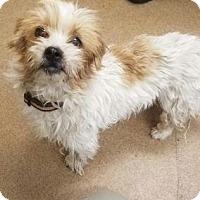 Adopt A Pet :: Gigi #162442 - Apple Valley, CA