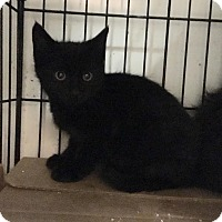 Adopt A Pet :: Berkley - East Brunswick, NJ