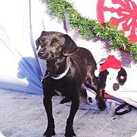 Adopt A Pet :: Flo - West Chicago, IL