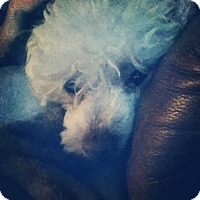 Adopt A Pet :: Steve - Bakersfield, CA