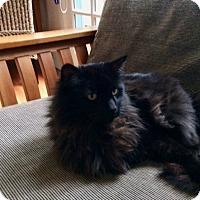 Adopt A Pet :: Coco (formerly known as Wyatt) - Novato, CA