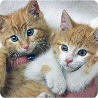 Adopt A Pet :: Siblings Sweet & Dream - Chicago, IL