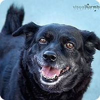 Adopt A Pet :: MOLLY - Phoenix, AZ