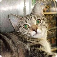 Adopt A Pet :: Ollie - Fort Lauderdale, FL