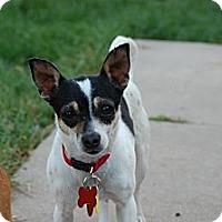 Adopt A Pet :: Betsy - Kempner, TX
