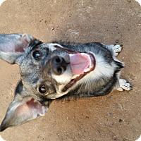 Adopt A Pet :: Patrick - Parker, CO