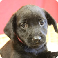 Adopt A Pet :: Piper - Waldorf, MD