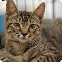 Adopt A Pet :: Lily - Richmond, VA