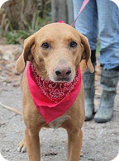 Hound (Unknown Type) Mix Dog for adoption in Oakland, Arkansas - Snooks