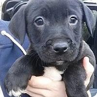 Adopt A Pet :: Luigi - Gainesville, FL