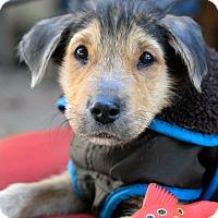 Adopt A Pet :: Randy - Baton Rouge, LA