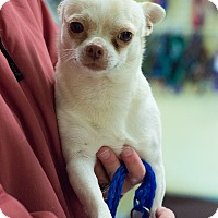 Adopt A Pet :: Nemo - Kingman, KS