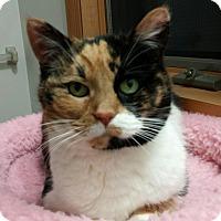 Adopt A Pet :: Lucky - New Kensington, PA