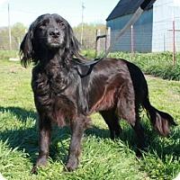 Adopt A Pet :: Lela - Salem, NH