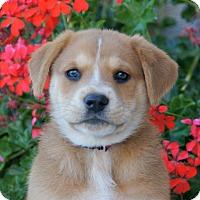 Adopt A Pet :: Elizabeth von Maysie - Thousand Oaks, CA
