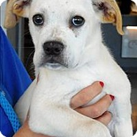 Adopt A Pet :: Dixion - Topeka, KS