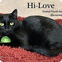 Adopt A Pet :: Hi-Love - Ortonville, MI