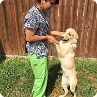 Adopt A Pet :: Buddy - Norwalk, CT