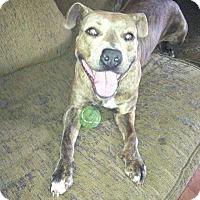 Adopt A Pet :: Delilah - Summerville, SC