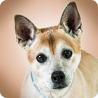 Cattle Dog Mix Dog for adoption in Prescott, Arizona - Aiden