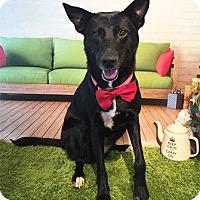 Adopt A Pet :: Lotus - Castro Valley, CA
