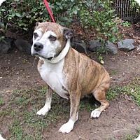 Adopt A Pet :: Burnadette - Waldorf, MD