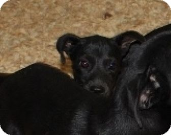Whippet/Spaniel (Unknown Type) Mix Dog for adoption in Harmony, Glocester, Rhode Island - Legs