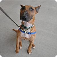 Adopt A Pet :: Baxter - Hyde Park, NY