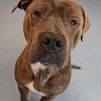 Adopt A Pet :: Jim - Bay Shore, NY
