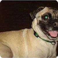 Adopt A Pet :: Kermit - Poway, CA