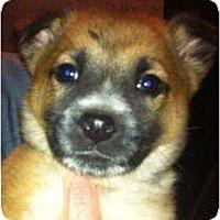 Adopt A Pet :: Sassy - Scottsdale, AZ