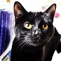 Adopt A Pet :: Maggie - Xenia, OH