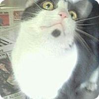 Adopt A Pet :: Princess - Whitestone, NY