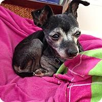 Adopt A Pet :: Sammy - Wilmington, DE