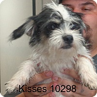 Adopt A Pet :: Kisses - baltimore, MD