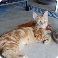 Adopt A Pet :: Goldie - Hamilton, ON